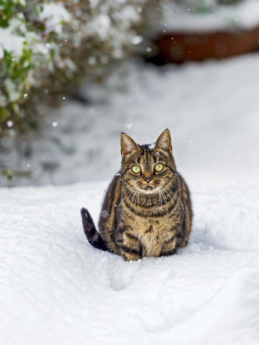 Зима - кошки торжествуют!  E6de3959ef4024a300cd99bae82e031d
