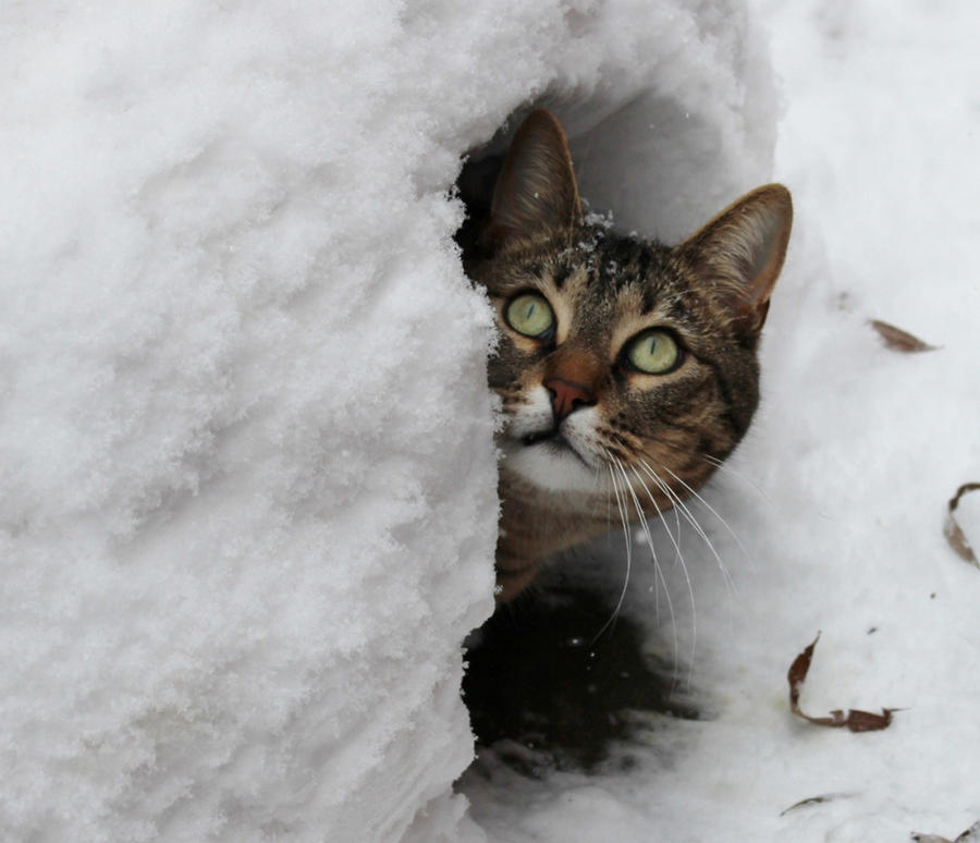Зима - кошки торжествуют!  F2e638b33ec1f9a48a816ebffc3f4d2a