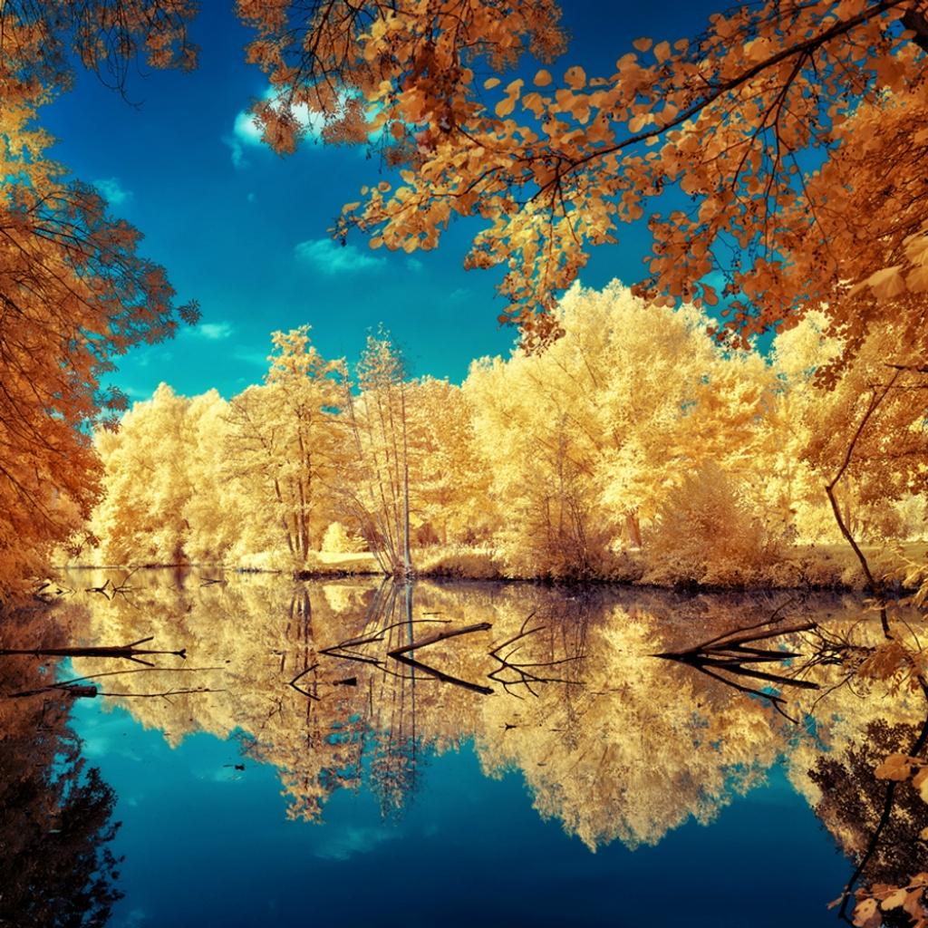 Сказочный мир в инфракрасном свете  0_85fd6_9a33bc91_orig