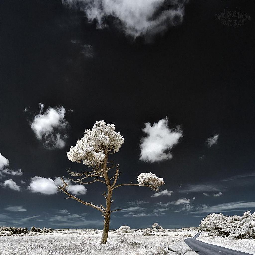 Сказочный мир в инфракрасном свете  Skazochnyj-mir-v-infrakrasnom-svete-8