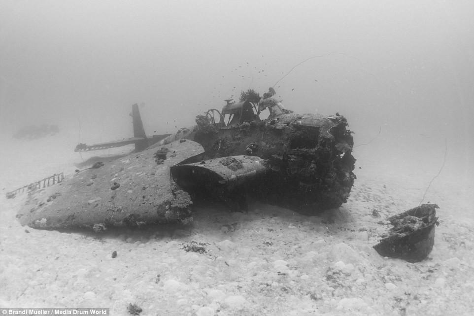 Cimetière d'avions de la WW2 magnifiques photos sous-marine 1e36a3c114af0aa27f3e1528db960695