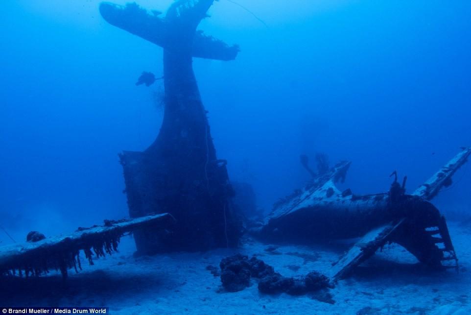 Cimetière d'avions de la WW2 magnifiques photos sous-marine 4abbf09369f61b9989b455a6d7f64b83