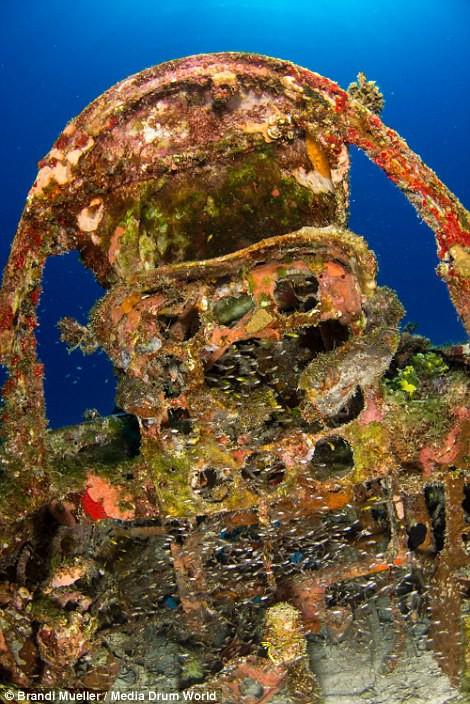 Cimetière d'avions de la WW2 magnifiques photos sous-marine 6b9fdebb861ce90afad7bb2826b5e537