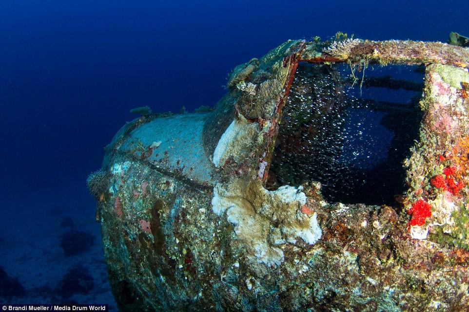 Cimetière d'avions de la WW2 magnifiques photos sous-marine 6c02a9ed12aecab0aedee9ebd9df144a
