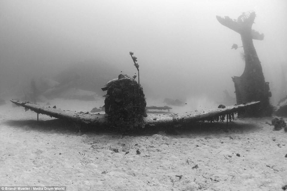 Cimetière d'avions de la WW2 magnifiques photos sous-marine 99460b8f908ef7842c2147d11b2a2eb0