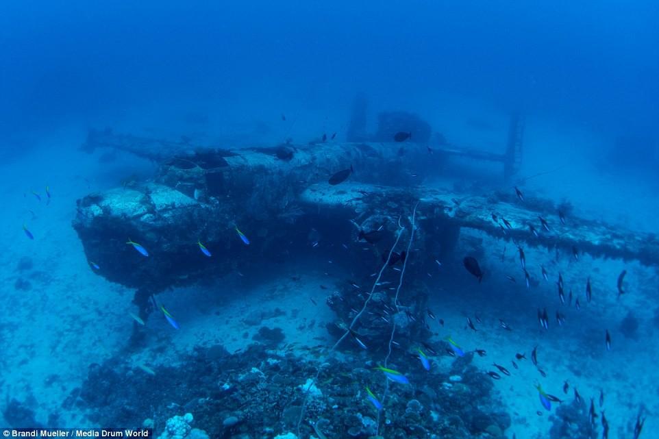 Cimetière d'avions de la WW2 magnifiques photos sous-marine D8038d1749fafa6459570eb6d058e975