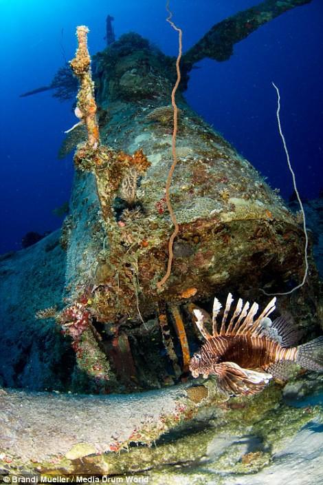 Cimetière d'avions de la WW2 magnifiques photos sous-marine Dd2530c1a249bae6748816862e985d42