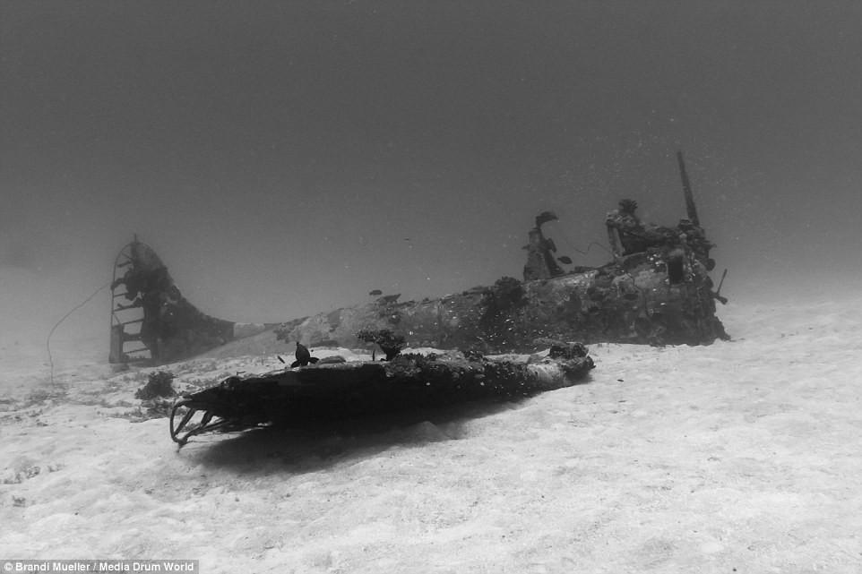 Cimetière d'avions de la WW2 magnifiques photos sous-marine E0bc0e14825d496fad5b7dc533a4e631