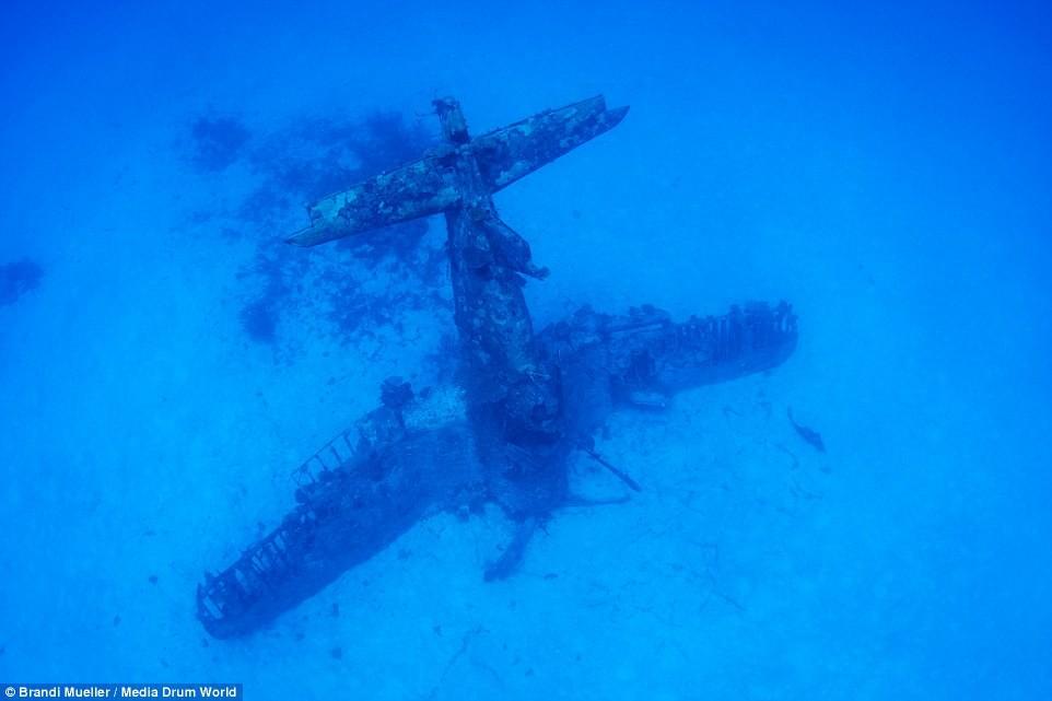 Cimetière d'avions de la WW2 magnifiques photos sous-marine Fe58fbc52ee9d3cd30bec0c68806f8f4