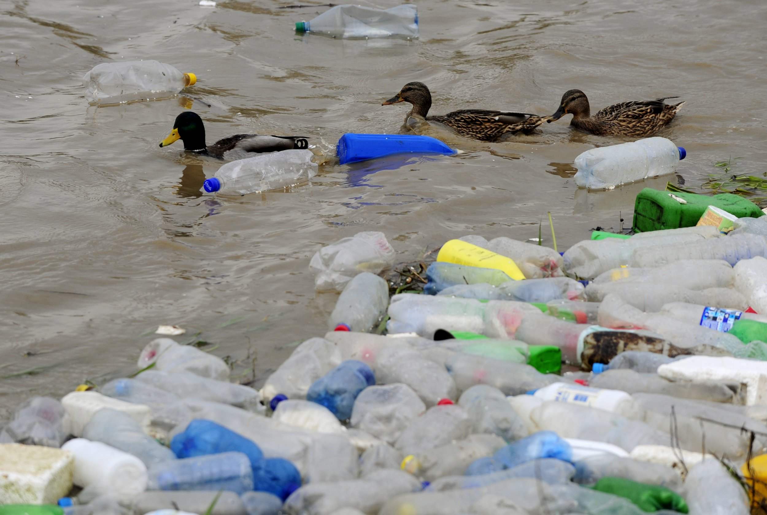 90 Percent of Seabirds Have Plastic in Their Stomachs  01-sep-2015plastic-pollution