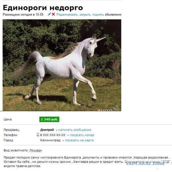 Веселые фотографии из сети - Страница 10 7768879