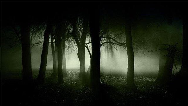 Запретный лес C16c1dd03da0