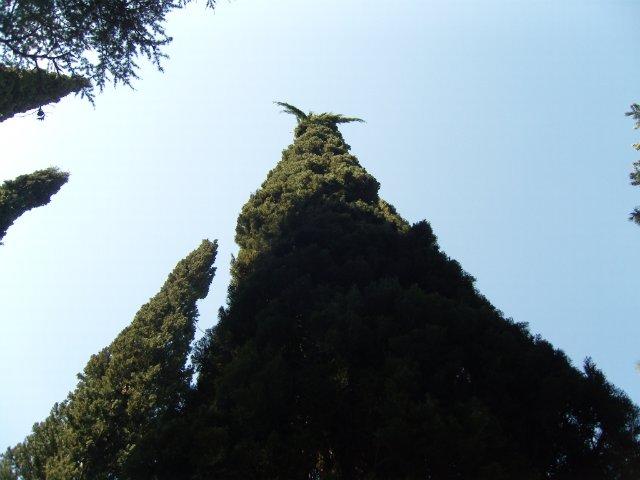 Крым. Никитский ботанический сад. 2101d5fa79f9