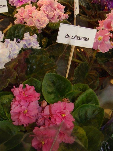 Международая выставка «Цветы.Ландшафт .Усадьба 2010» Астана - Страница 2 838d2aa6fc9f