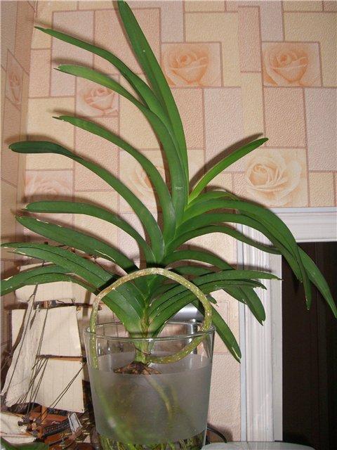 Орхидеи 3843a4e798fc