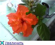 Меня затянула цветочная трясина... D300332447bet