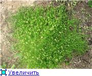 Помогите опознать растение. 2e16f74540f3t