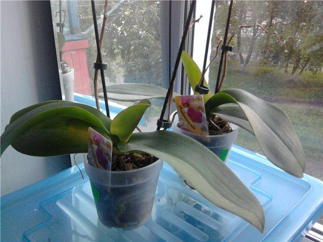 Уцененные растения из цветочных магазинов 4997a85685ed