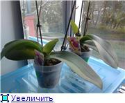 Разведение орхидей. - Страница 13 4997a85685edt