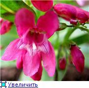Растения для альпийской горки. - Страница 3 Eb67159f1972t