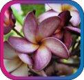 продам семена экзотических растений - Страница 3 Cdc7101a8ec4