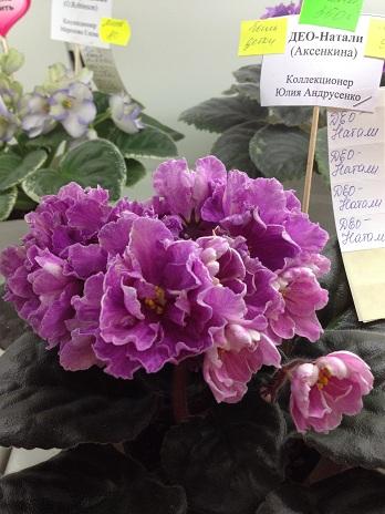 Выставка цветов - Страница 2 5fef7f086e5e