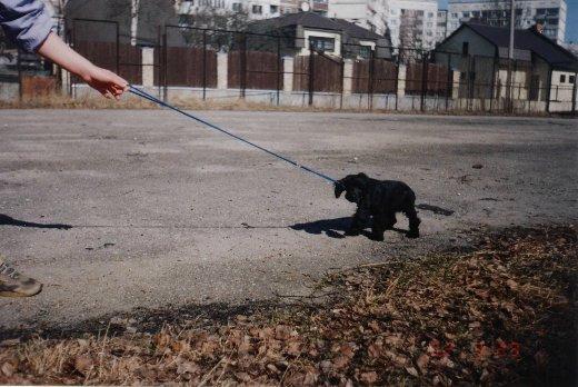 Собаки Татьяны Моисеенковой, кот Мензурка 9db3f5b77a42