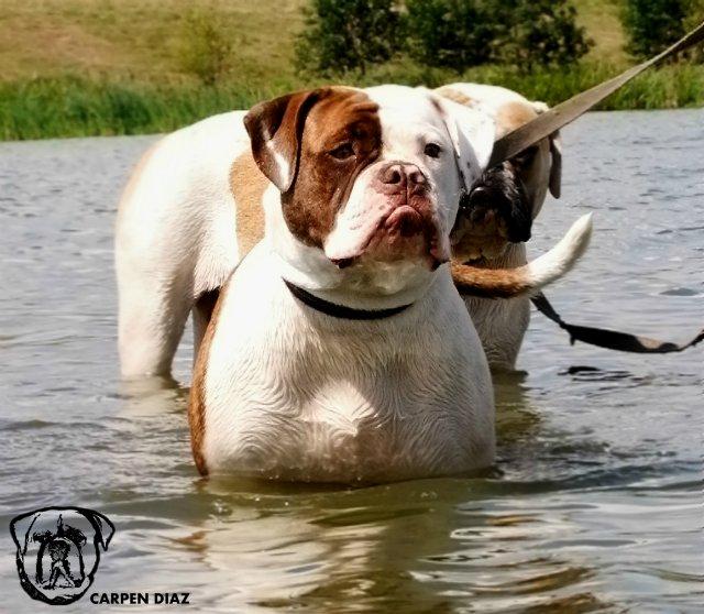 Собаки питомника Carpen Diaz - Страница 2 27fc10a3d768