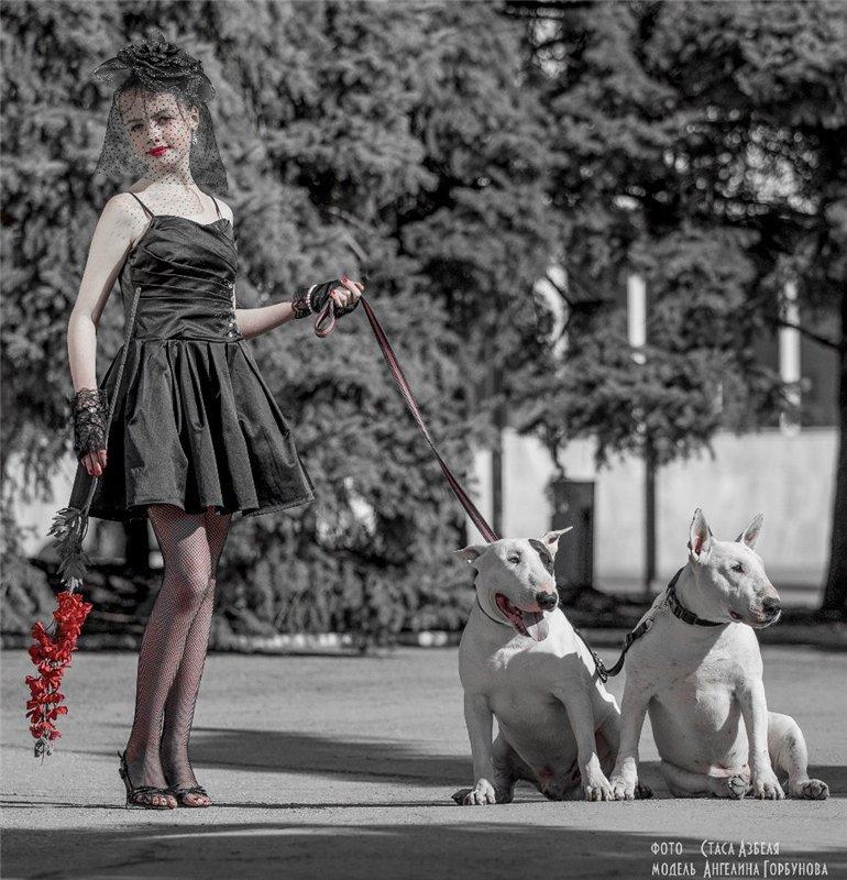 Собака-праздник! Сегодня и каждый день на арене Жоринька!!! - Страница 39 D628ccaa4adb