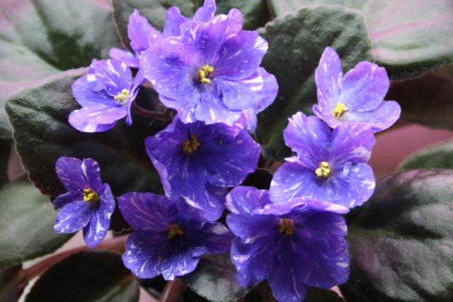Растения от FILIGERa - Страница 12 Aefbefe22e99