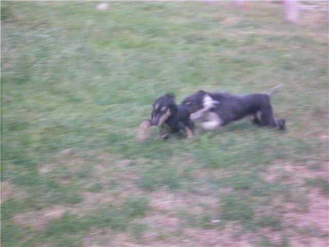 Моя первая собака. 71d7073da430