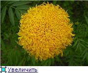 Наши домашние растения - Страница 2 Ec0af6750c94t