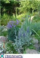 Растения для альпийской горки. - Страница 2 2ebbdf2d0c62t