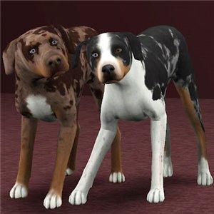 Собаки - Страница 4 076cc9293da7