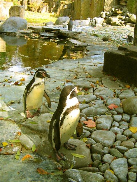 Разные зоопарки Aaa5ad0bf1aa