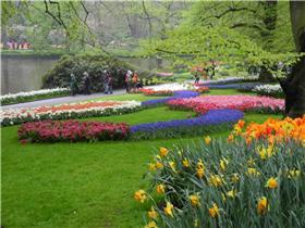 Рай тюльпанов или Кёкнхов - 2012 3df6f75c9418t