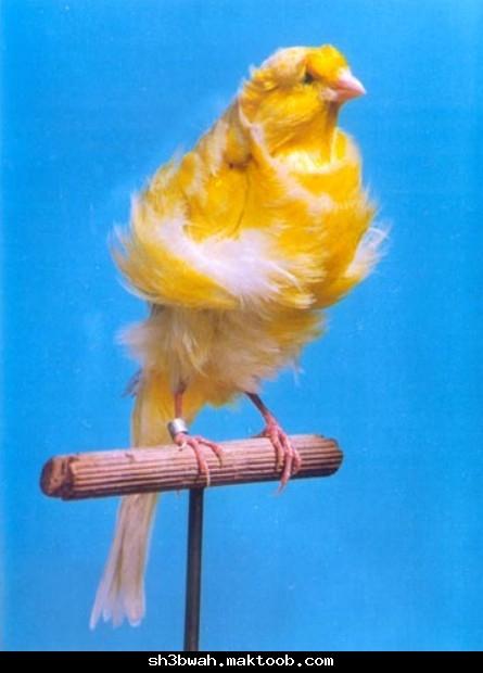 A 2 انواع نادرة من الطيور  Ee6ab30faf43