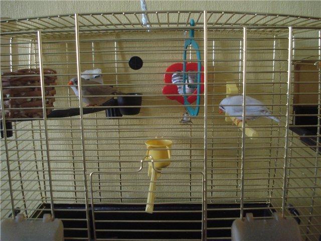 Наши попугайчики - Страница 2 30a049b01f25