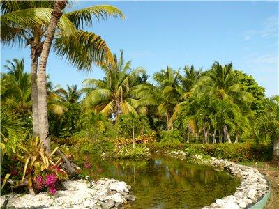 Привет из Доминиканы 72d4a1a65838