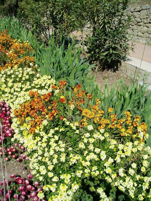 Крым. Никитский ботанический сад. E5e6c59ff1ee