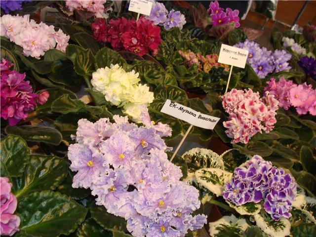 Международая выставка «Цветы.Ландшафт .Усадьба 2010» Астана - Страница 2 804a466788d0