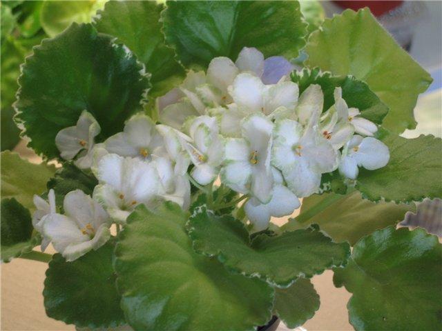 Мои цветики-семицветики B903437b5af0