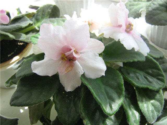 Моё цветочное богатство 47b683e05c59
