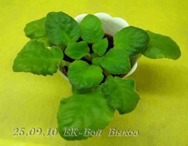 Цветение к Н. Г. (Olga-flora) 76bc9d64e127