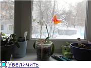 Стикеры и ярлыки для растений. Опоры для цветоносов. - Страница 5 10cd30a74d44t