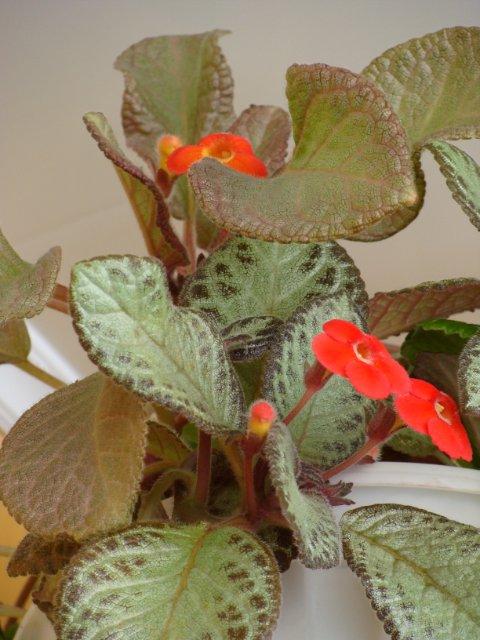 Мои цветочки - Страница 13 20105a18675e