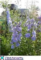 Лето в наших садах - Страница 4 78d08de9c097t