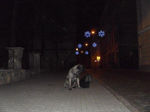 Собаки Татьяны Моисеенковой, кот Мензурка - Страница 3 D119ebe9466b