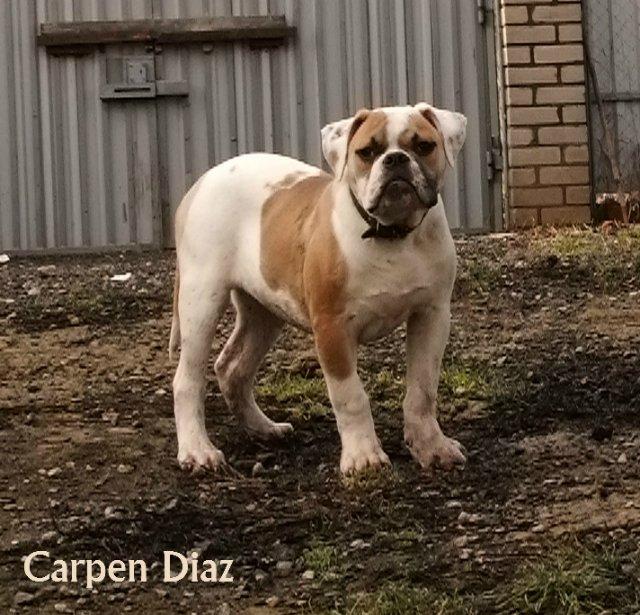 Собаки питомника Carpen Diaz - Страница 2 9eec67929037