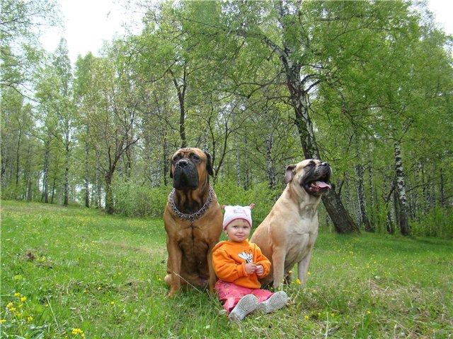 "Фотографии ""Бульмастиф и дети"" - Страница 6 56e6a0c0c41a"
